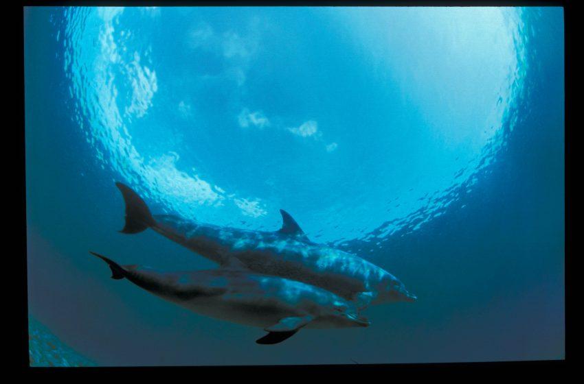בואו לפגוש את העולם התת ימי במוזיאון ברמת גן